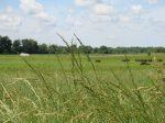 Hawkeye Buffalo Ranch