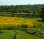 Oneota Slopes Farm