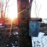 Big Timber Maple, LLC
