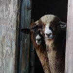 Leaf Livestock Wool Co.