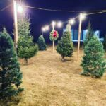 Neck of the Woods Christmas Trees