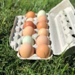 Farm fresh chicken eggs – $2